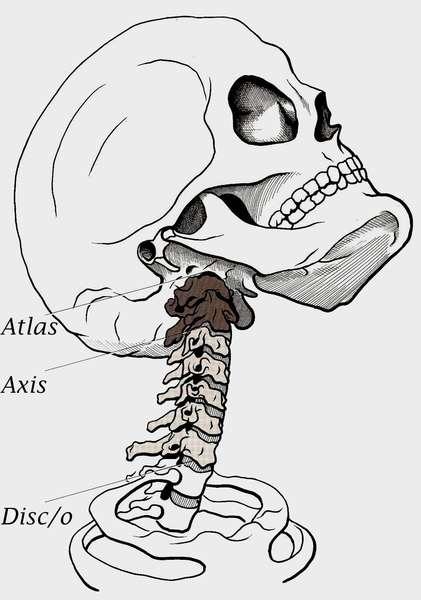 osteopathie la colonne cervicale pdf